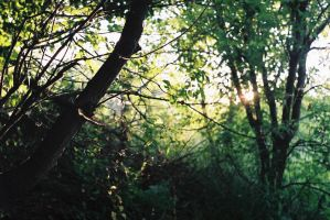 Greenery by love-grows-on-trees