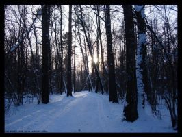 road in winter forest by die-for-love