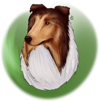 Rough Collie by Krudocian