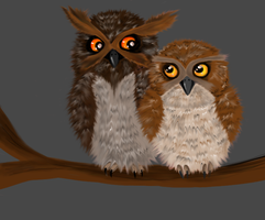 Owls by Canfas