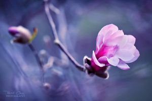 .:Sweet Magnolia:. by RHCheng