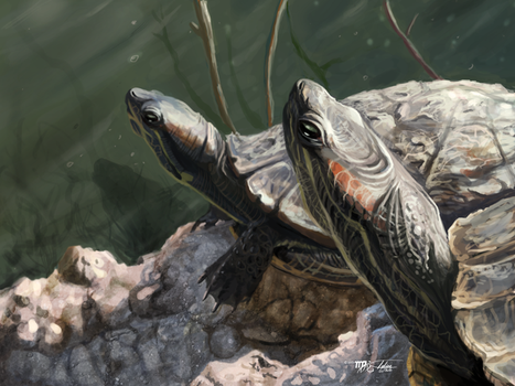 El Dorado Turtles: Sun Bath by Ito-Saith-Webb