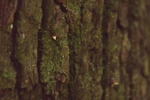 Moss Growth by HitePhotography