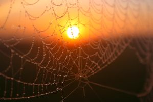 Webbed by angelzofdeath