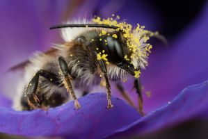 Pollen Loaded by Alliec