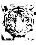Tiger Stencil by xManuelx