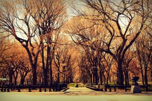 Central park trees by angela-swift
