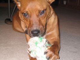 Pippin with tug-tug by Emagyne