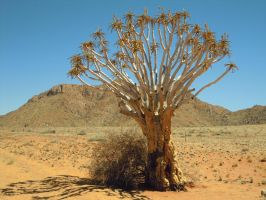 Tree in desert by Robinthedeviant