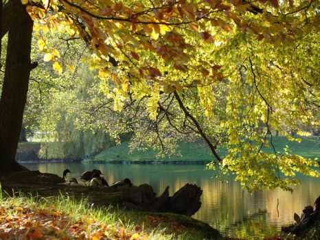 Pond in the Park 01 by LuDa-Stock