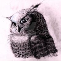 Owl by Coffeehouseartist