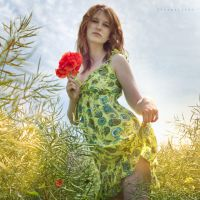 poppies 2 by Arielle-Fox