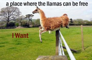 LLamas can be free by dunkelheart