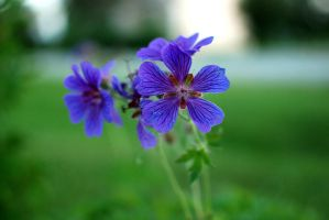 Purple flower by Fialu