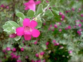 Sprightly Pink by jacobjellyroll