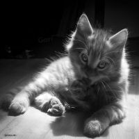 Juste comme Chat by Rayon2lune
