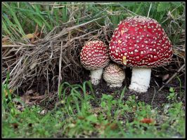 Fly Agaric by cycoze