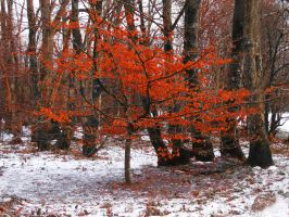 Coppery Woodland Tree by tartanink