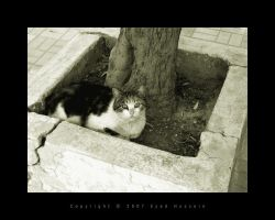 Cat 5 by eyadness