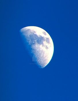 Moon from the back yard by ntaylor1981