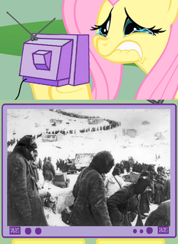 fluttershy reacts at poor germans in stalingrad by nmort69