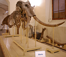 Better view of 'Marta' by Lynus-the-Porcupine
