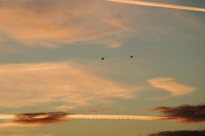 Free birds at sunset by Luks85