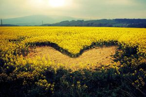 There is a heart in the field by phonzik