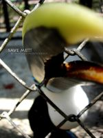 save me... by santiagomontesdeoca