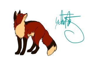 Fox Drawing by Joava