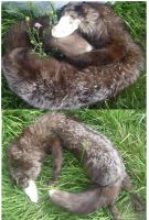 Silver Skullfox SOLD by Tricksters-Taxidermy
