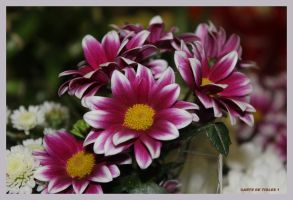 Spring for You by Tigles1Artistry