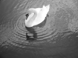 Lady Swan by evetus