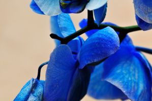 Shades of blue by NB-Photo