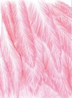 Flamingo Feathers|Colored Pencil by LimeLit