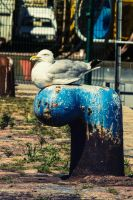 Seagull in Boulogne sur mer by Lad2-0