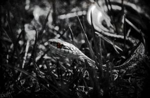 The Serpent by GrimFay