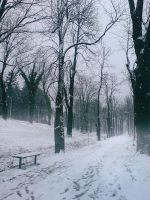 Snow.. by groby