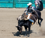 Rodeo8-2014 by Lonewolf-Eyes