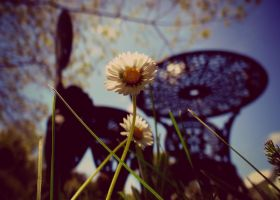 Point of view by Aroha-Photography