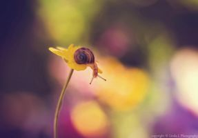 Little World by lindahabiba