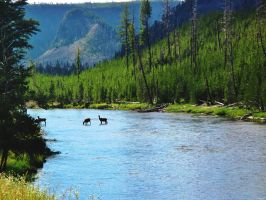 Madison River #2 by KRHPhotography