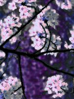 Cherry Blossoms by thereisnolove