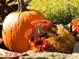 Fall 2013: Another Autumn Still Life by NyaShass