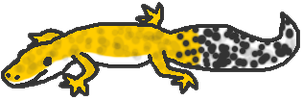 Gecko by EveningClouds
