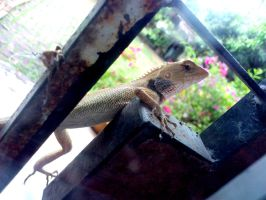 wild gecko3 by plainordinary1
