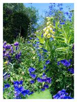 The Blue 'n Yellow Garden by alassea-ancalimon