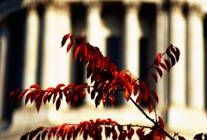 Fall Leaves by amixer