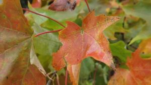 A Day at Mille Lacs 071 - Fall Colors by DarlingChristie