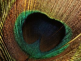 A Peacocks Eye by webcruiser